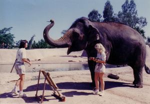 It All Started with an Elephan...