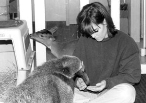 here I'm working with an anteater and muntjac